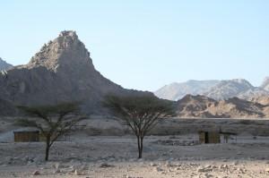 stromy sú dôkazom, že v blízkosti osady je prameň vody
